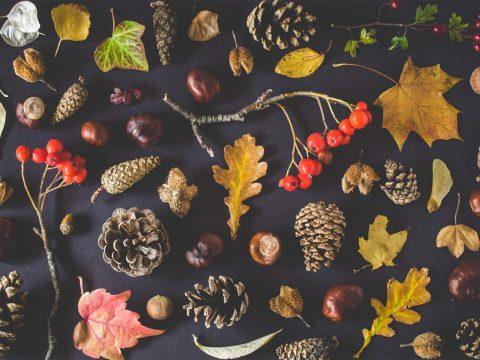 health-tips-for-holiday-season